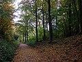 Woodland ride, Leigh Woods - geograph.org.uk - 1592519.jpg