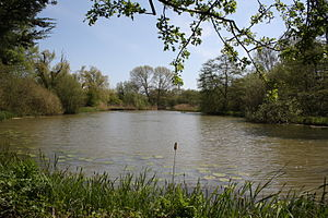 Sussex Wildlife Trust - Woods Mill lake