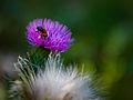 Working bee (3173679372).jpg
