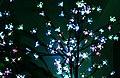 Wraxall 2013 MMB B0 Christmas.jpg