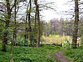 Wymondley Wood - geograph.org.uk - 4053.jpg