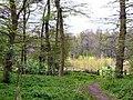 Wymondley Wood - geograph.org.uk - 4053.jpg