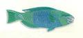 XRF-Chlorurus sordidus.png