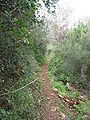 Yagur – Nesher, the Green Path – Mount Carmel 011.JPG