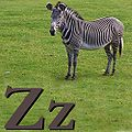 Z is for Zebra.jpg