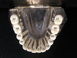 Dental notation - Image: Zahneschema UK 1