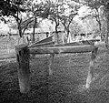"""""""Baba"""" in trlice, Reber 1957.jpg"""
