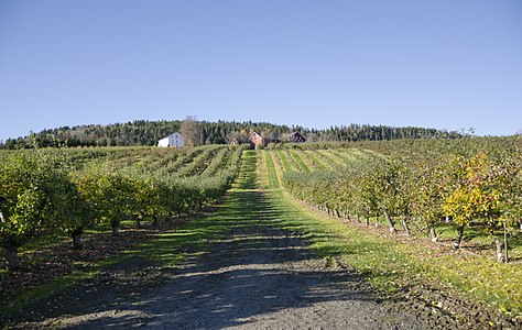 Apple orchard Stoppen