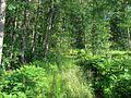 Ādažu novads, Latvia - panoramio (1).jpg