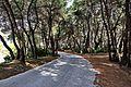 Δάσος Στροφυλιάς 8.jpg