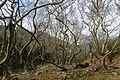 Φύση - panoramio (1).jpg