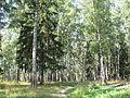 Август в Ивановской области (3).jpg