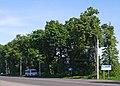 Алея вікових лип на виїзді з Вінниці P1390510.jpg