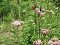 Бабочки 1.jpg