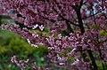 Ботанічний сад Хмельницького національного університету по вулиці Інститутській. Фото 2.jpg