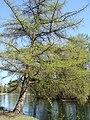 Дворцовый парк Гатчины-Palace Park in Gatchina - panoramio (12).jpg