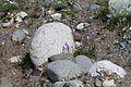 Колокольчики в камнях.jpg
