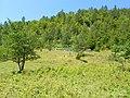 Планина Озрен (6).jpg