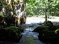 Посебни (геолошки) резерват природе Говјештица, Бања Стијена и Кањон Праче 32.jpg