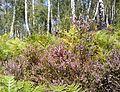 Рослини Сколівськіх Бескид.jpg