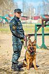 Собаки НГУ 4009 (19328662956).jpg