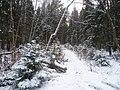 Тропинка в Балатовском парке зимой-Trail in Balatovs park in winter, конец ноября 2011 - panoramio.jpg