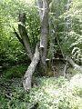Част от гората.jpg