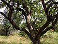 Яблоневый сад - panoramio (13).jpg