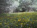 أجواء الربيع بالونشريس.jpg