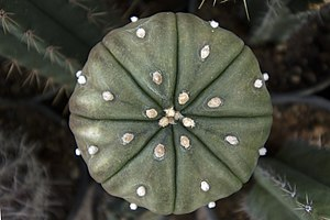 گونه های کاکتوس در گلخانه دنیای خار در قم 35.jpg
