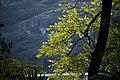گیاهان در پاییز - باغ بوتانیکال تفلیس 12.jpg