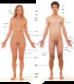 मानव शरीर.png