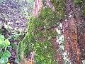 อุทยานแห่งชาติ แม่วงก์ - panoramio (2).jpg