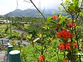 南澳村 Nanao Village - panoramio.jpg