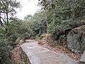 吹台山上的新路 - panoramio.jpg