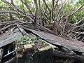 安平樹屋 Anping Tree House - panoramio.jpg