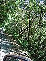 屋久島サルDSC02097.JPG