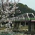 桜橋 吉野町飯貝にて Sakura-bashi 2012.4.10 - panoramio.jpg