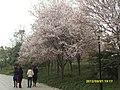 浣花溪公园- - panoramio.jpg