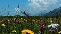 热尔大坝草原Rerdaba grassland - panoramio (7).jpg
