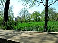 矢川緑地 - panoramio.jpg