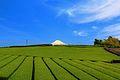 神戸の茶畑 - panoramio (2).jpg