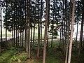 福士 弘圓寺下 - panoramio.jpg