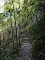 竹林步道 - Bamboo Walk - 2014.07 - panoramio.jpg