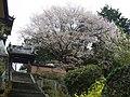 興大禅寺の山門 下市町下市(田中) 2012.4.15 - panoramio.jpg