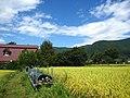 里山辺は美しい田園が広がる地帯でもある.jpg