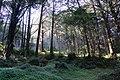 阿里山 Alishan - panoramio (5).jpg
