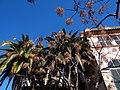 07170, Valldemossa, Balearic Islands, Spain - panoramio.jpg