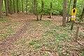 15-05-09-Biosphärenreservat-Schorfheide-Chorin-Totalreservat-Plagefenn-DSCF5523-RalfR.jpg