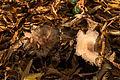 15-11-01-Kaninchenwerder-RalfR-WMA 3296.jpg